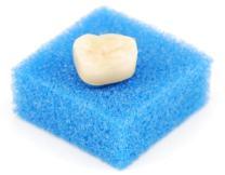 Sample dental crown
